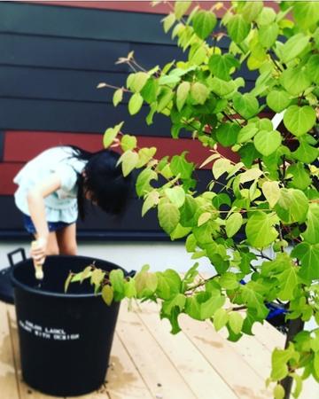 簡単手頃にイメージアップ「植物で飾るウッドデッキ」入門編