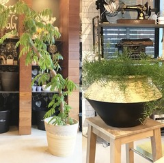 「秋の新商品」入荷!スタイリッシュな鉢をご紹介(前編)