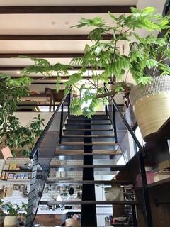 「秋の新商品」入荷!スタイリッシュな鉢をご紹介(後編)
